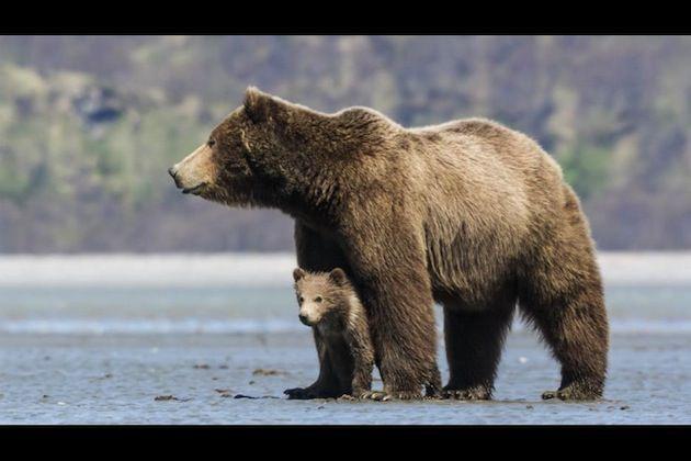 bears520bfe114ea57