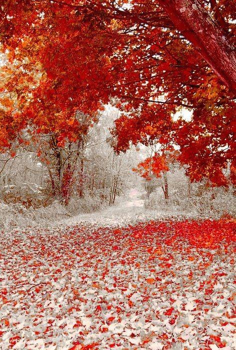 fall-snow